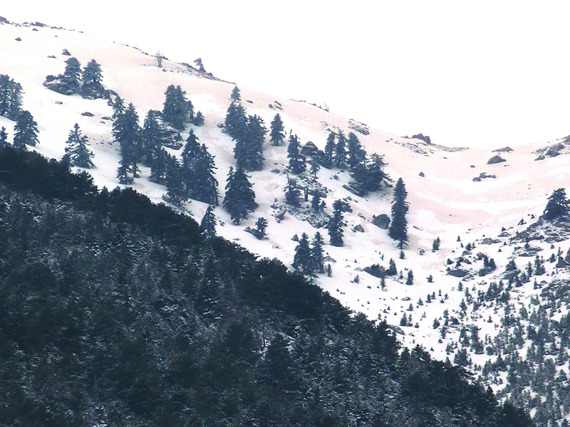 ultima nieve 2015 10s